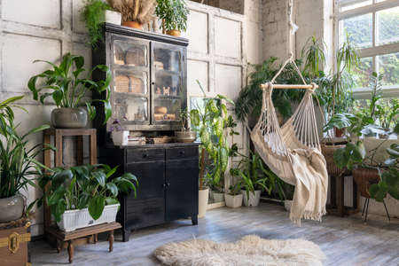 Cozy rope swing in living room with green houseplants in flower pot and black vintage chest of drawers. Comfort room with furniture in house with modern interior design 版權商用圖片