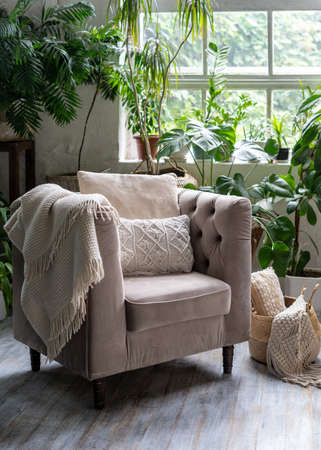 Cozy living room with plaid and cushion on comfortable armchair against green houseplants in flower pots. Wooden floor in apartment with modern interior style 版權商用圖片