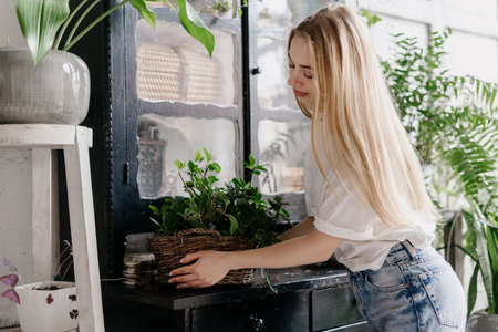 Decoration with fresh plants in room with cozy interior. Calm young woman in casual wear holding wicker basket of natural green houseplant, put flower pot on vintage wooden commode. Home decor concept Imagens