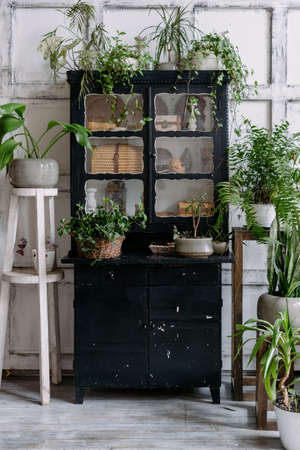 Vertical shot of black vintage cabinet filled with antiques decorated with lot of potted green plants in light bohemian style room with wooden furniture. Bohemian interior design concept