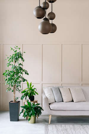 Decor in home interior, living room with sofa. Scandinavian minimalistic style of house design, closeup of modern couch near green plant. Gray pillows on furniture, nobody at house. Standard-Bild