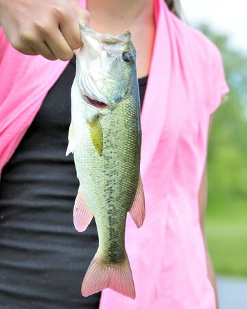 A young girl holding a largemouth black bass photo