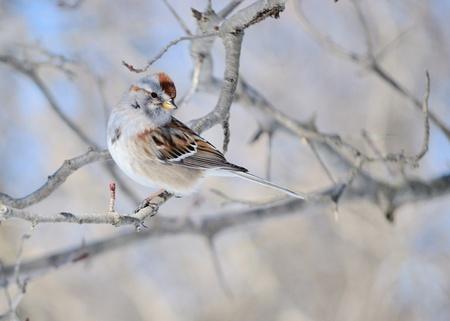 Sparrow Stockfoto - 8759804