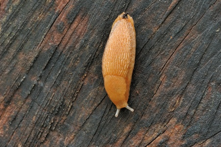 A slug moving along a tree trunk. Banco de Imagens - 9636084