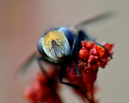 Macro closeup of a fly perched on a plant.