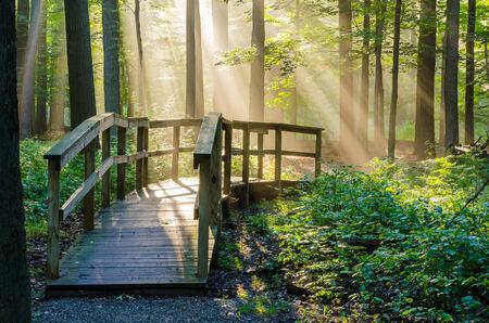 luz natural: Luz de la ma�ana irradia el brillo en un pasillo de la naturaleza en el bosque. Foto de archivo