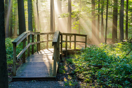 light rays: Morning Light Rays shining on a nature walkway in the woods.