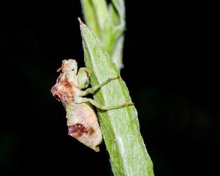 ambush: An Ambush Bug perched on a plant stem.