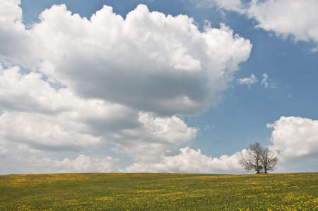 meadow and alone tree Stock Photo