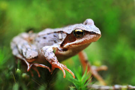 Frog in forest Stock Photo