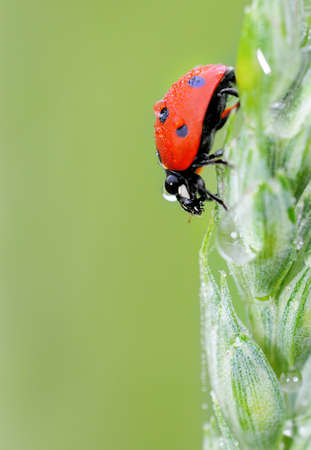 Bug on the leaf Stock Photo