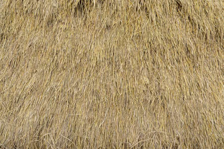 Dry straw neatly stacked vertically. Grass hay. Background texture