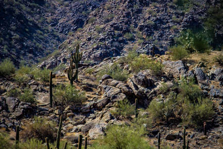 Cactus on a mountain Фото со стока