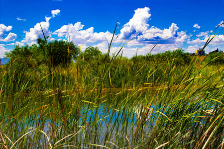 Blue sky with clouds over a pond 写真素材 - 108021083