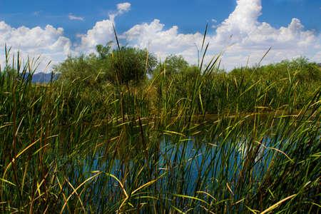 Cloudy sky over a pond