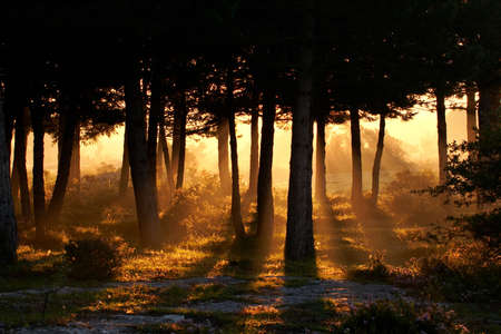 Awakening of day in the forest photo