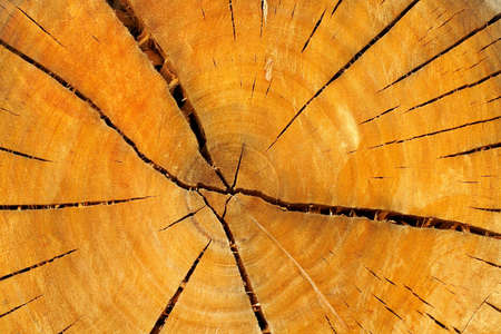Closeup annual growth rings, background Stock Photo - 494492