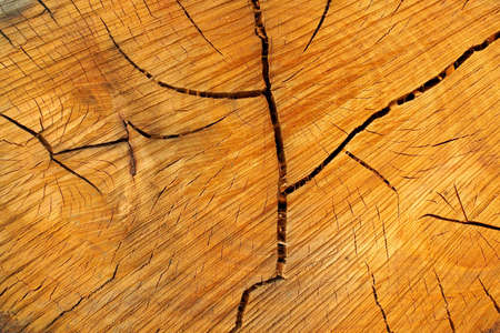 Closeup annual growth rings, background photo