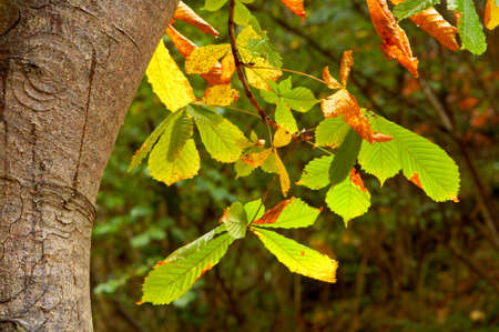 Leaves on a tree in autumn season Stock Photo - 672956