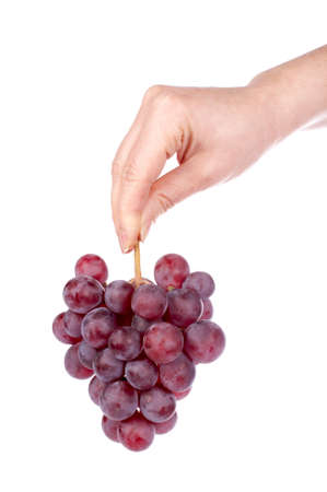 Holding a red grapes bunch on the white background photo