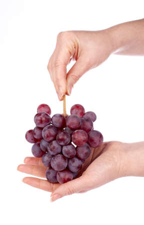 Holding a red grapes bunch with the hands on the white background photo