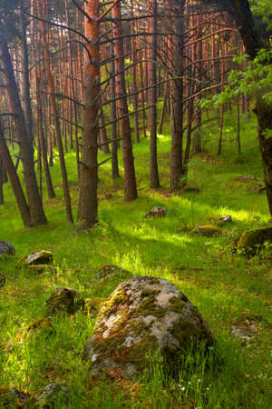 Walking across the forest in the spring photo