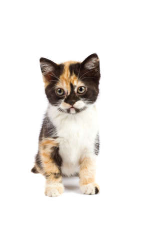 A kitten sits on a white background photo
