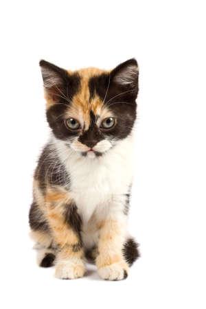 A sadnes kitten sits on a white background Stock Photo - 1951497