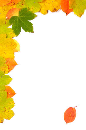 Colorful autumn corner made from leaves with soft shadow, on white background photo