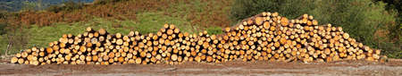 A panoramic view of logs neatly stacked near the forest path photo