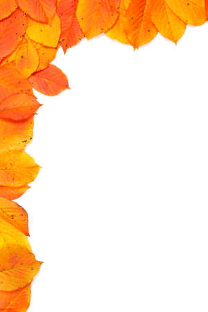 Colorful autumn corner made from leaves on white background Banco de Imagens