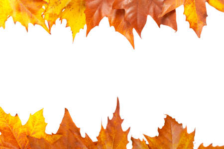 leave: Colorful autumn border made from leaves, isolated on white background. Space for text
