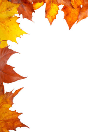 golden border: Colorful autumn corner made from leaves, isolated on white background