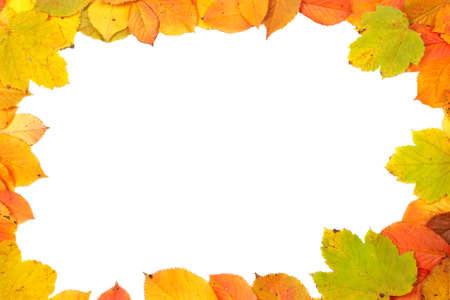 Colorful autumn frame made from leaves on white background photo