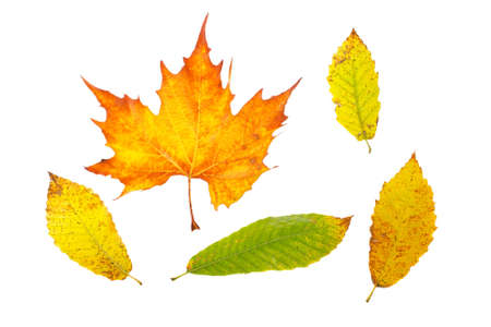 Assortment of leaves, isolated on white background photo