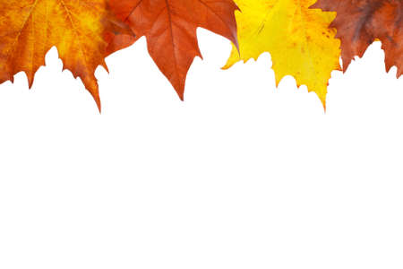 golden border: Colorful autumn border made from leaves, isolated on white background. Space for text
