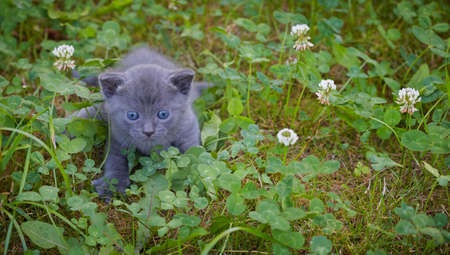 A nice kitten playing on the grass photo