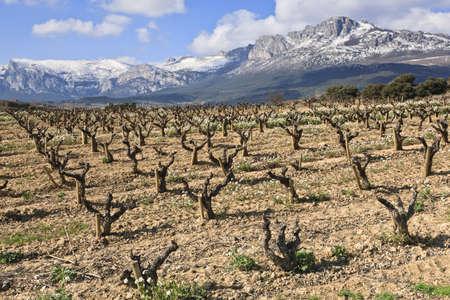 Fields of vineyards in La Rioja, Spain