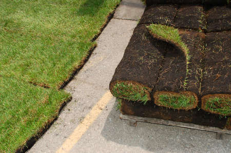 cut grass: Close-up of fresh sod on display.