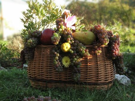 summer harvests of fruits in the wicker basket