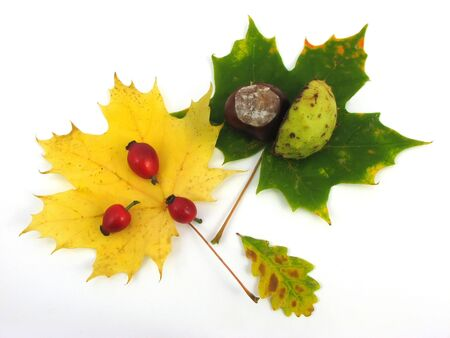 compisition of autumn leaves, colors of autumn