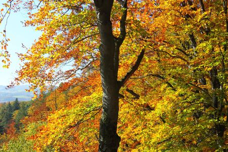 Colorful leaves of the trees in autumn season