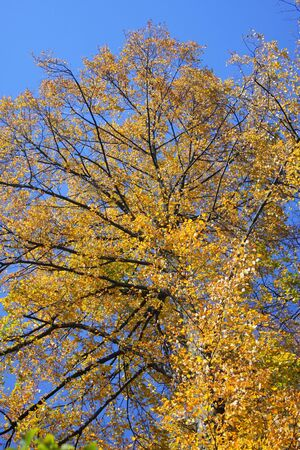 Big tree at the autumn sky background Stock Photo
