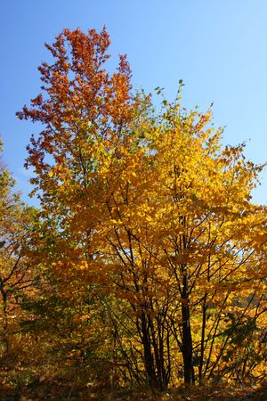 Colorful autumn leaves of the tree on the background of the sky