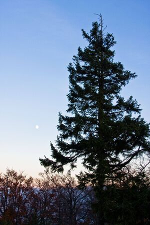 Christmas tree in the light of the moon Stock Photo