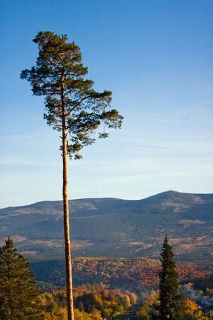 Pine on the background of mountains and the sky