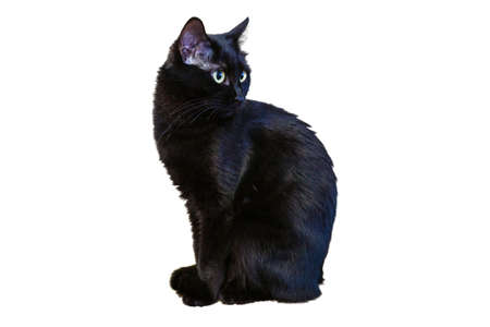 A black cat on a white background looks directly into the camera with a confident look.