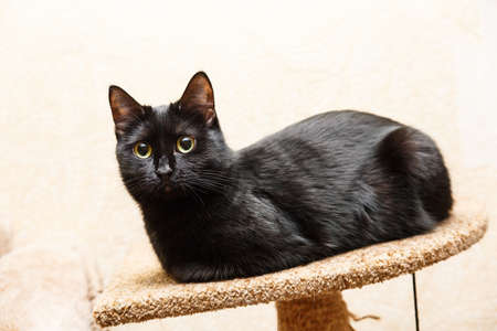 Black cat lying on the ground and carefully looking to the side Stok Fotoğraf