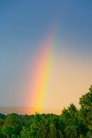 A bright rainbow in the sky against the background of green trees and blue sky.