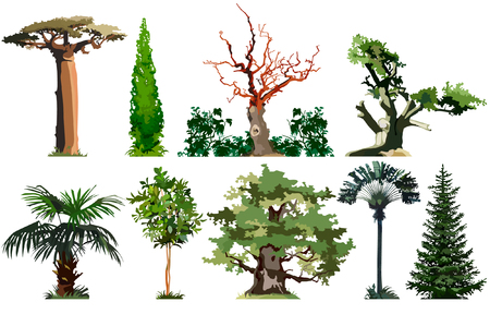 Trees, baobab, cypress, palm, oak, spruce, set Vector